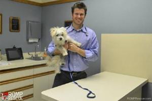 Dr Chris, wheatland animal hospital, chicago, italian greyhound rescue, vet, naperville vet, naperville, illinois, il