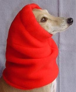 Italian Greyhound Snood