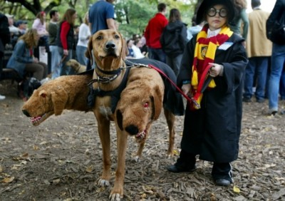 Diy dog halloween costumes romp italian greyhound rescue diy halloween dog costume harry potter dogs solutioingenieria Choice Image