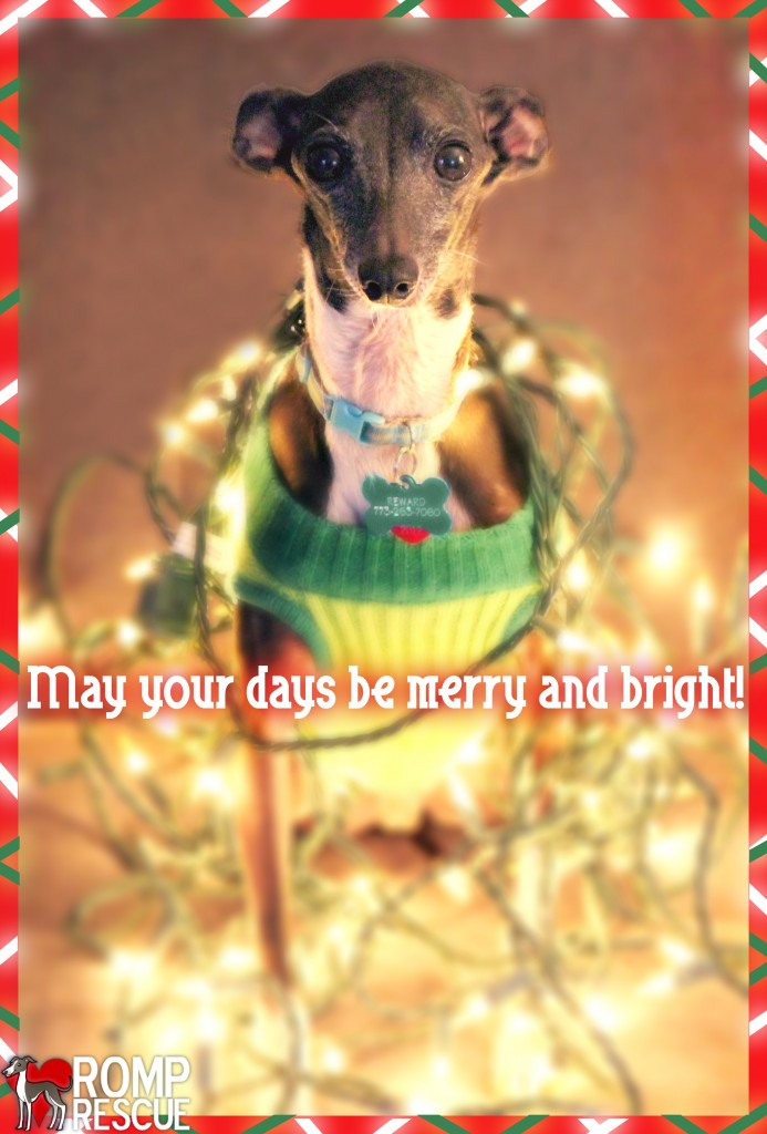 Dog holiday card, xmas dog card