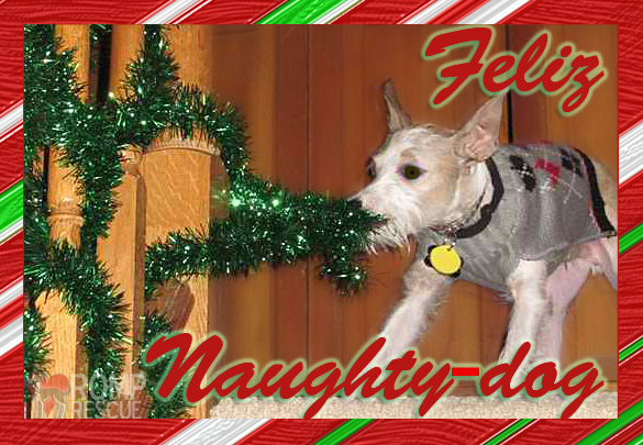 Funny dog christmas card cards doggy holiday feliz navidad, bad dog holiday card, feliz naughty dog, funny pet cards, pet cards, pet holiday cards, dog holiday cards, doggy holiday cards