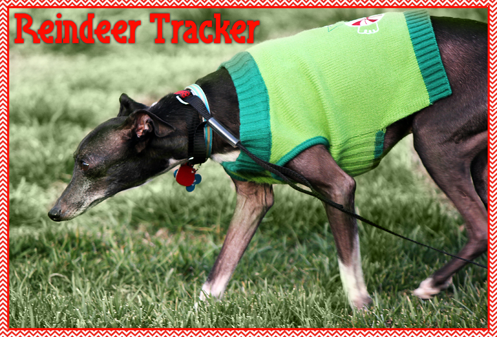 Funny holiday pet christmas cards, Reindeer tracker, dog sniffing