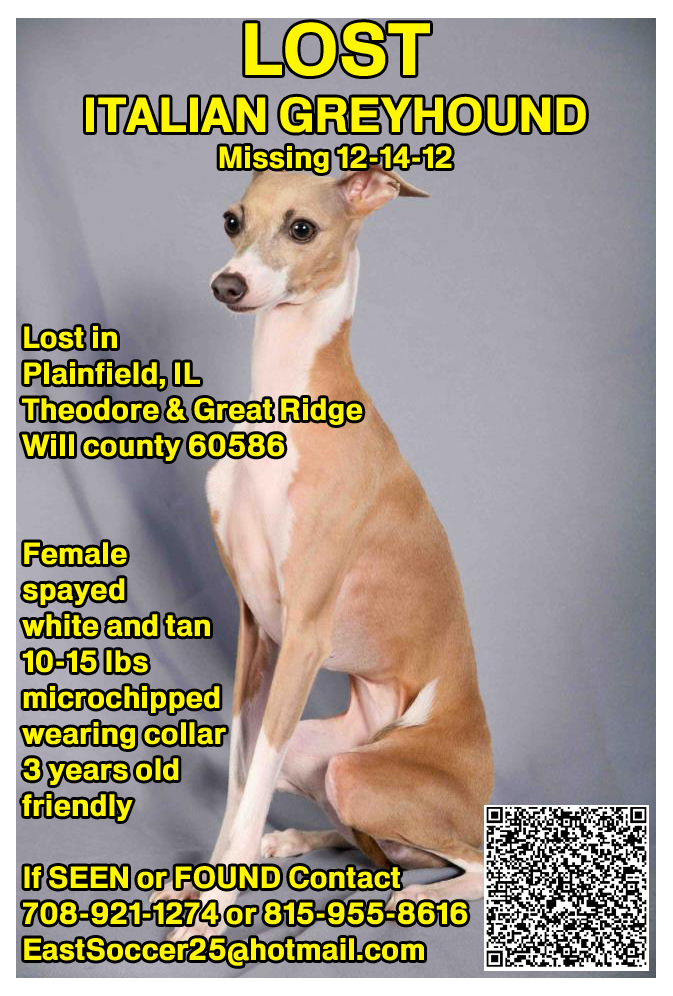 Lost Italian Greyhound, Lost Dog Tips, Missing Dog