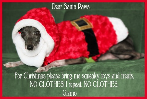 Santa Paws, Dog Holiday Card, Xmas Pet Card, Dog Xmas Card, Funny