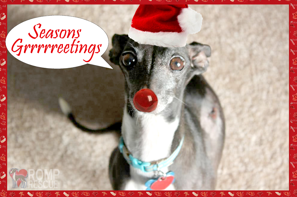 Seasons Greetings, funny pet cards, funny italian greyhound, cute italian greyhound, italian greyhound christmas, christmas italian greyhound