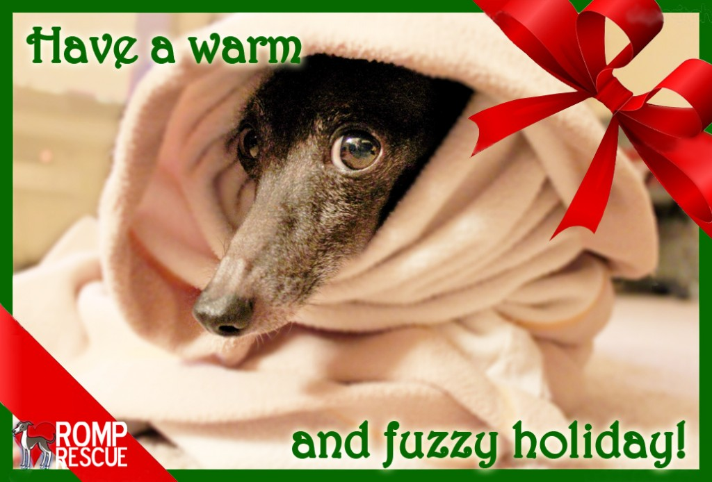 pet holiday card saying, christmas italian greyhound, italian greyhound, italian greyhound, holiday italian greyhound, pet card, pet holiday card