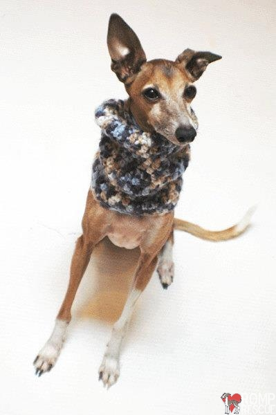 dafoxx, snood, crochet snood, custom, handmade, homemade, coupon code, discount, italian greyhound, iggy, ig