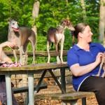 Italian Greyhound meetup, italian greyhound play date, chicago play date, chicago dog park, chicago dog park, chicago italian greyhound play date, chicago italian greyhound meet up