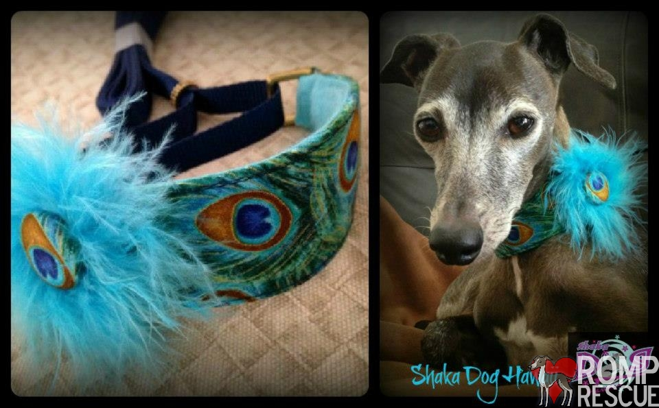 Online Fundraiser, shaka dog, shaka, collar, martingale, leash, custom, botique, unique, peacock, adorable, cute, italian greyhound, greyhound, leash, custom, home made, custom made, made
