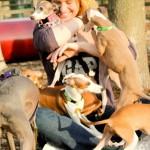 Illinois italian Greyhound meetup