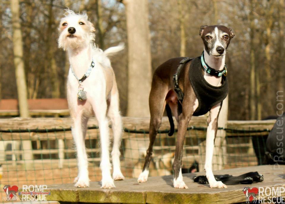 dogs in forest preserves, illinois, chicago, off leash dog parks, off leash dog park, naperville, glendale heights, warrenville, oak brook, il