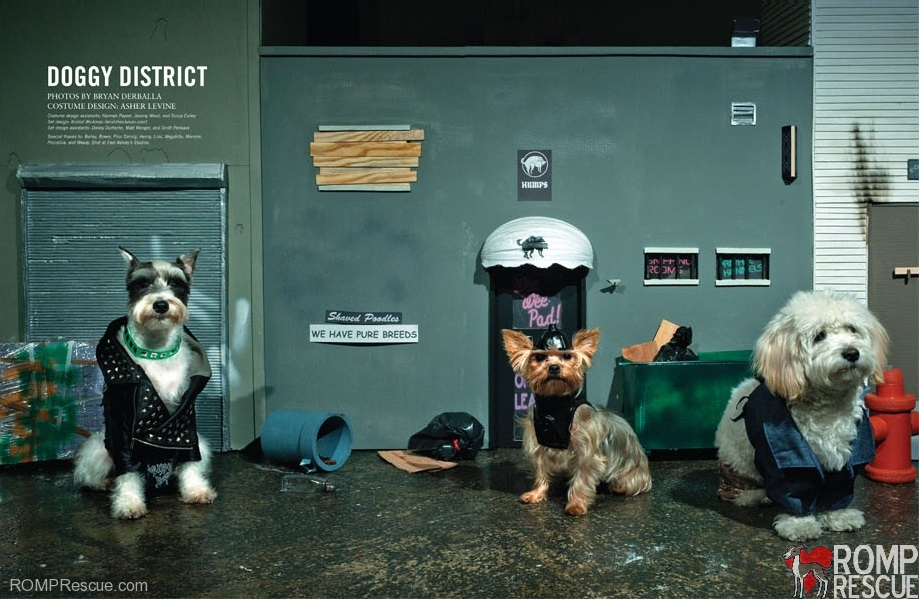 Bryan Derballa, vice, italian greyhound, magazine, editorial, fashion, dog, dogs
