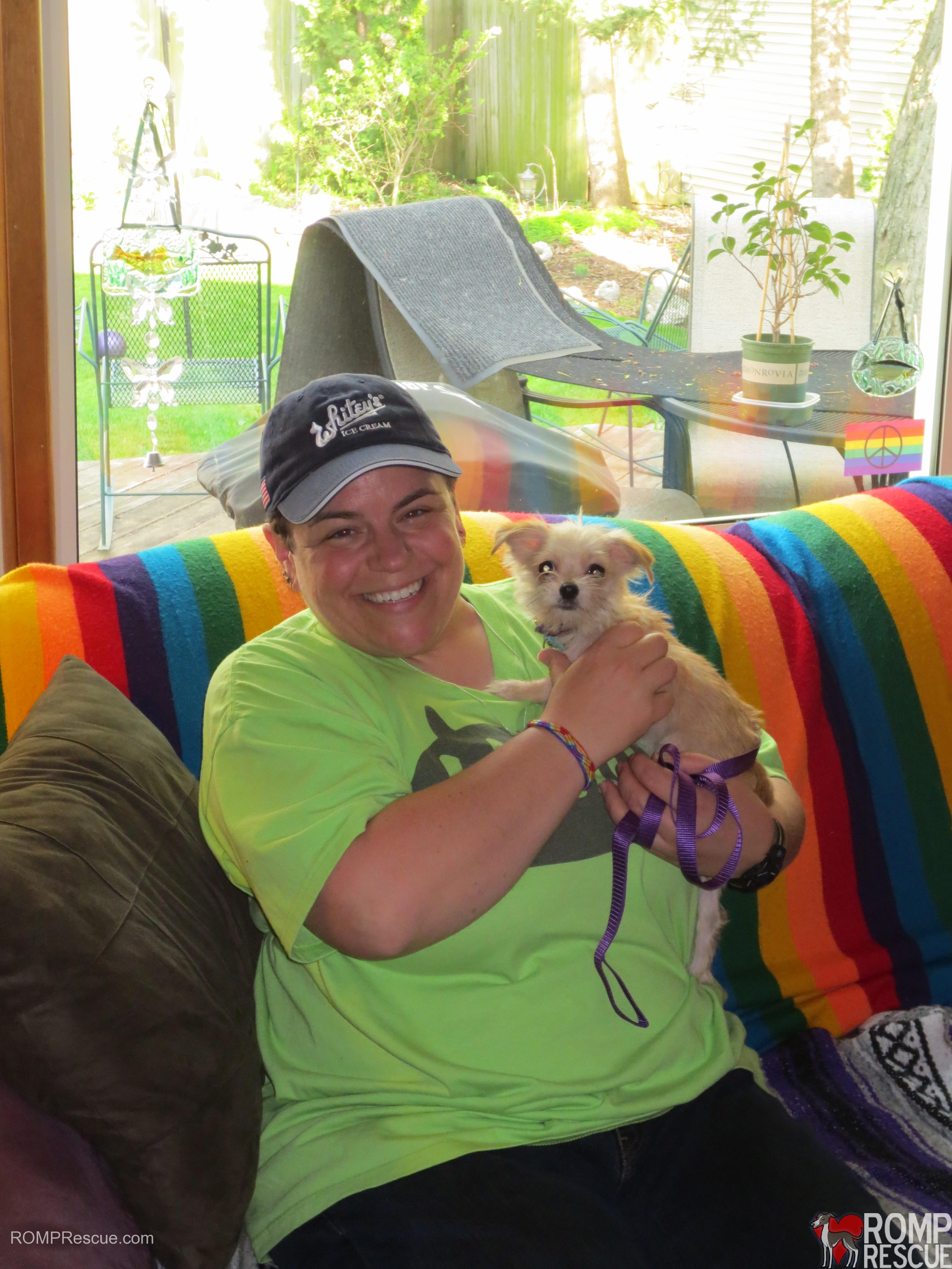 Chicago Small Dog Rescue, italian greyhound adoption, italian greyhound rescue, chicago, cooper, beckham, romp rescue, dewey