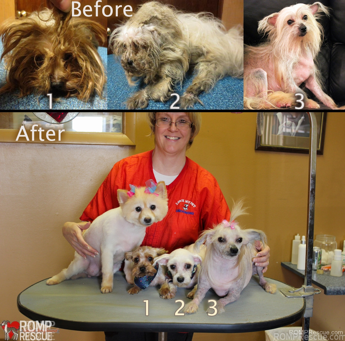rescue, before after, before and after, dog rescue, dog, dogs, rescue, rescue, shelter, shelters, volunteer, groomer, miracle, cleaned up, maltese, yorkie, matted, badly matted, help