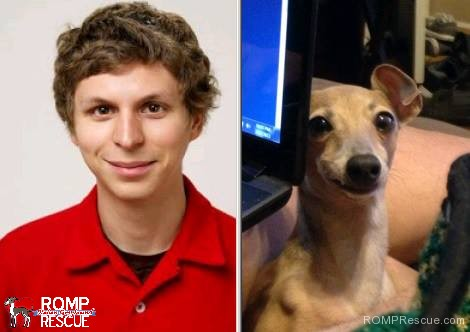 Italian Greyhound Lookalikes, italian greyhound doppelganger, giraffe, italian greyhound, italian, greyhound, funny, cute, hilarious, lookalike, look a like, looks like, michael cera