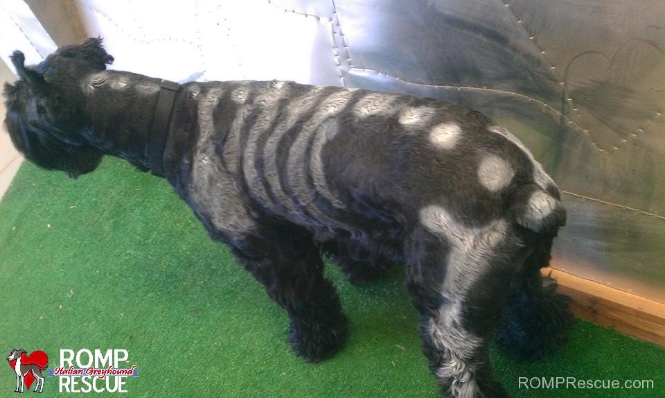 Pet Paint Dog Halloween Costume Skeleton