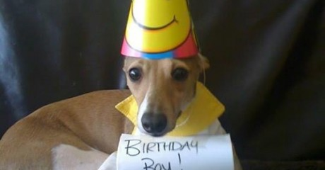 Italian Greyhounds Celebrating Their Birthday Archives Romp