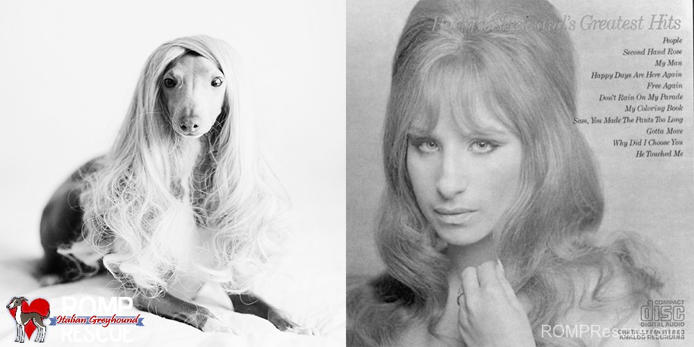 barbara streisand, italian greyhound, lookalike, funny, similar, celebrity, singer