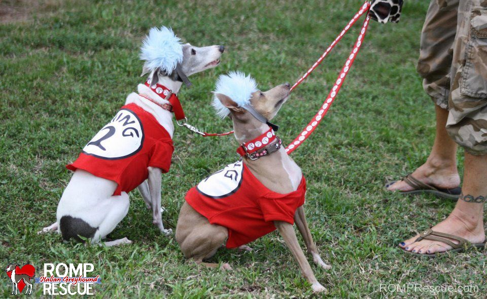 38 italian greyhound halloween costumes romp italian greyhound italian greyhound halloween costumes solutioingenieria Image collections