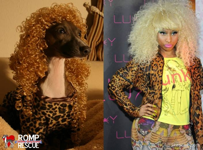 Italian Greyhound Lookalikes, italian greyhound doppelganger, giraffe, italian greyhound, italian, greyhound, funny, cute, hilarious, lookalike, look a like, looks like, nicky minaj
