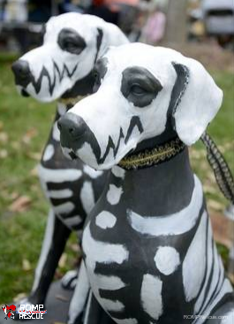 scarecrow fest, st charles, dog, rescue, romp, rescue, italian greyhound, scarecrow festival, 2013, winner, whimsical