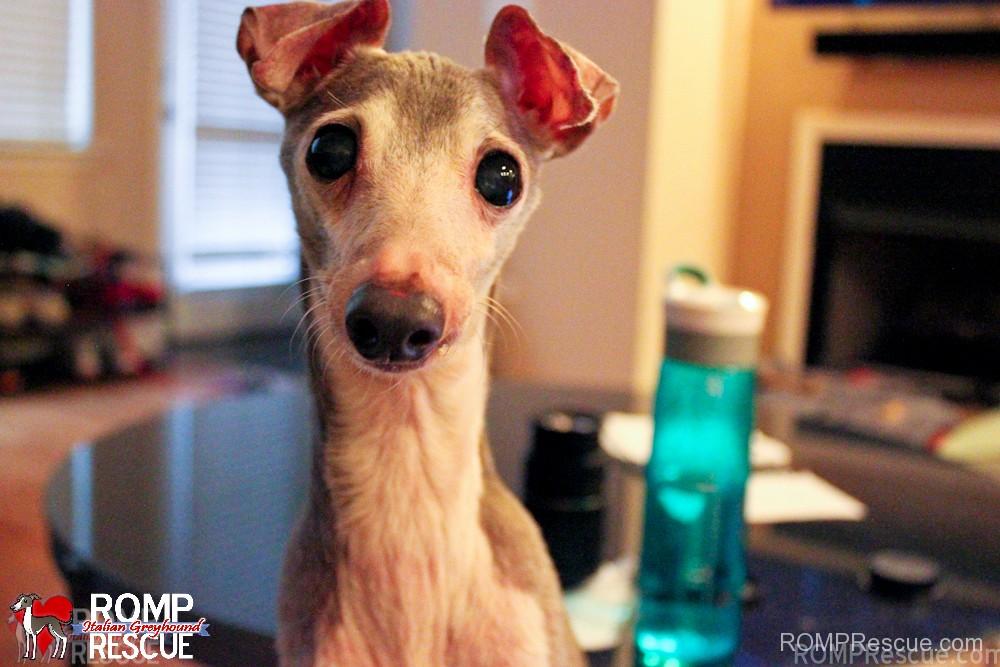 Dog Bark Too Much, barking dog, dog barks, bark, barking, barks, too, much, dog, pet, pup, foster, door, stop, fix, help, make