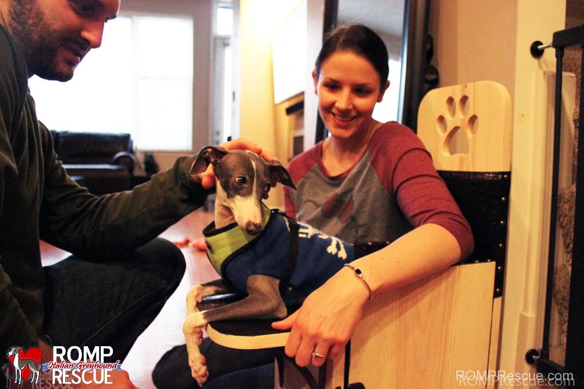 megaesophagus, canine, dog, italian greyhound, bailey chair, rescue, romp