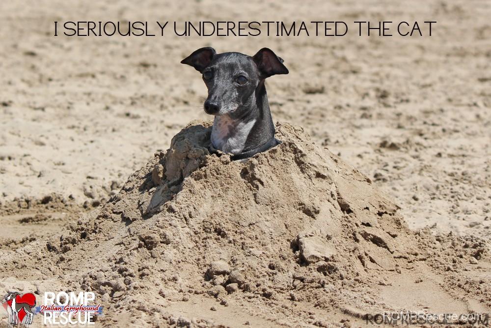 Italian Greyhound meme, meme, funny, silly, saying