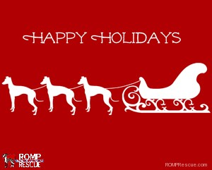 Italian Greyhound Christmas card