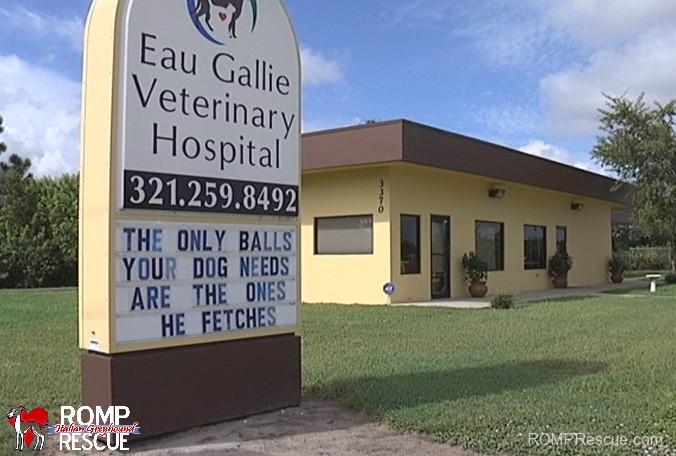 eau gallie, veterinary hospital, racy, signs, veterinarian, funny veterinarian sign, funny vet sign, funny, vet, sign, vet, marquee, animal clinic, animal hospital,