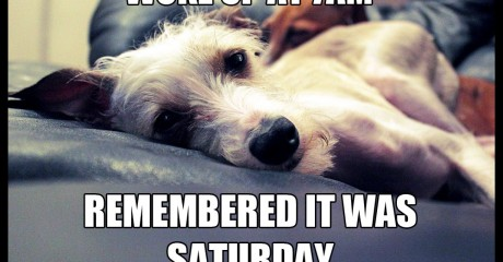 Funny Memes About Making Love : Italian greyhound meme archives romp italian greyhound rescue