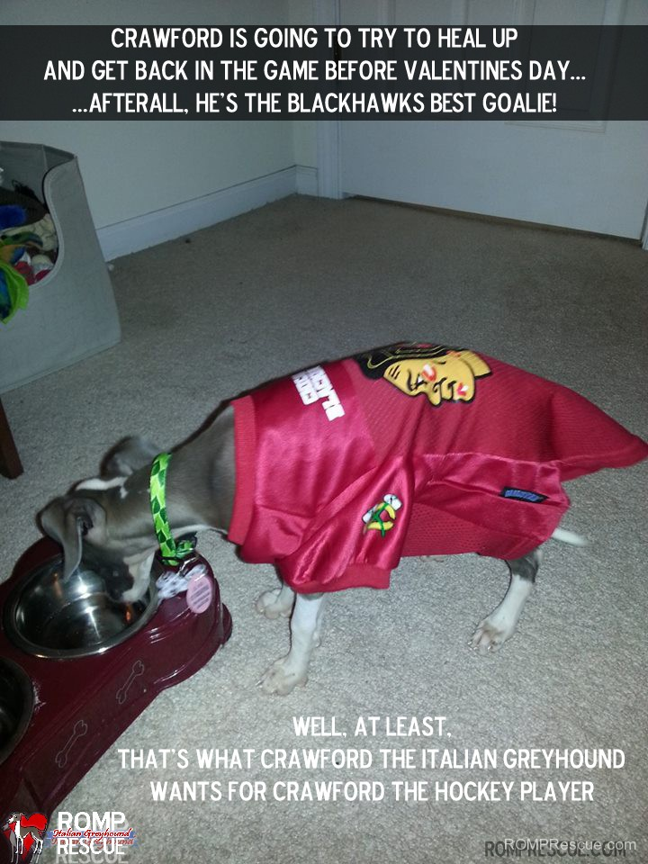 new years resolution, 2014, dog, funny, italian greyhound, chicago, illinois, shelter, rescue, dogs, dog, pet, pup, rescued, rescues, dogs new years resolution, new years resolution for dog, funny, silly, hilarious, meme