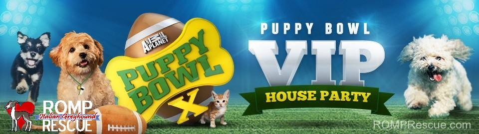 puppy bowl x, house party, vip party, puppy bowl, animal planet