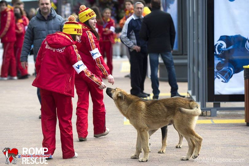 Stray Dogs in Sochi, stray, dogs, sochi, killing, poison, help, dogs in sochi, sochi dogs, sochi strays, strays in sochi