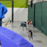 Chicago Small Dog Play Date
