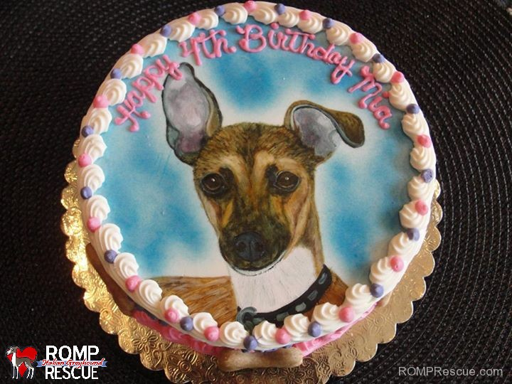 italian greyhound birthday cake, italian greyhound, iggy, ig, greyhound, birthday, cake