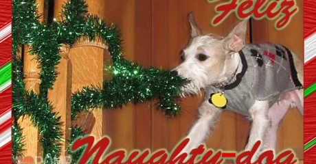 Funny Christmas Card Ideas For Your Dog Those Pet Loves Our There Here Are Some The Festive Fur Family A