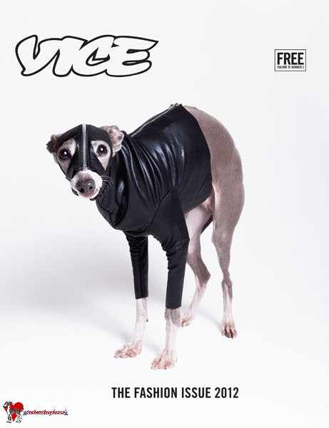 Image result for Dominatrix dog costume